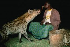 The Hyena Man of Harar feeds the hyenas.
